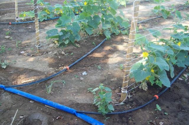 системы полива и орошения для огорода