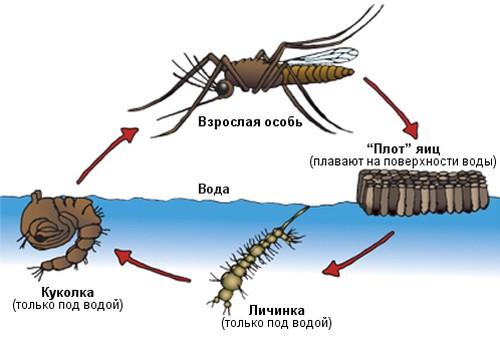 Комары уничтожение устройство сделай сам куда можно сдать макулатуру и туле